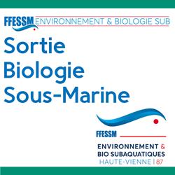Sortie environnement et biologie subaquatique PB1 ET PB2 - octobre 2021 - Bassin d'Arcachon