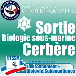 Sortie Biologie sous-marine Pentecôte à Cerbère du 3 au 5 Juin